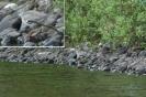 Rantakurvi Nissinjärvellä